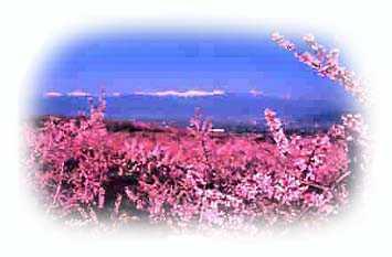サンテデイサービスセンター 本木の画像