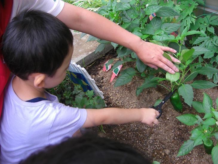 大和つきみ野雲母保育園(管理栄養士/栄養士の求人)の写真8枚目: