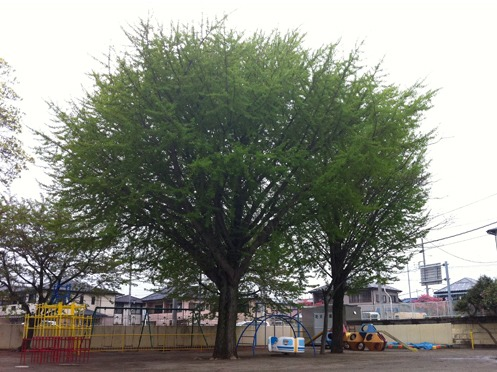 高木幼稚園の画像