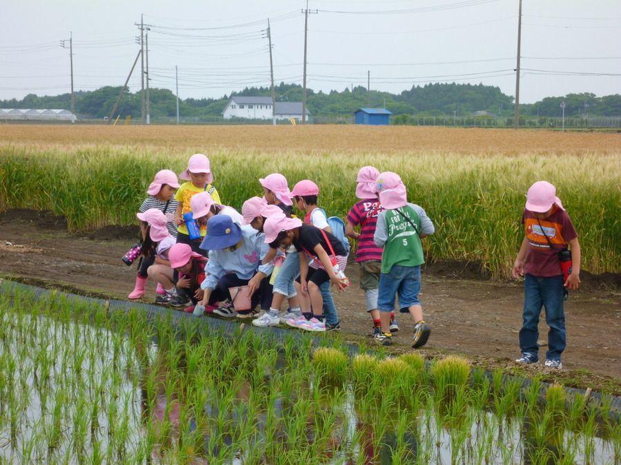 社会福祉法人 海の子保育園の画像