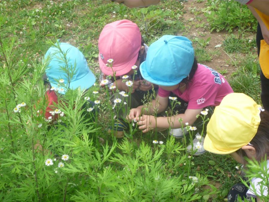 保育ルームFelice中央林間園
