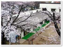 向陽台保育園の画像