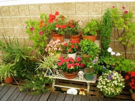 グループホームフレンズハウス中島新町(介護職/ヘルパーの求人)の写真3枚目:庭には季節ごとに花などを植えています