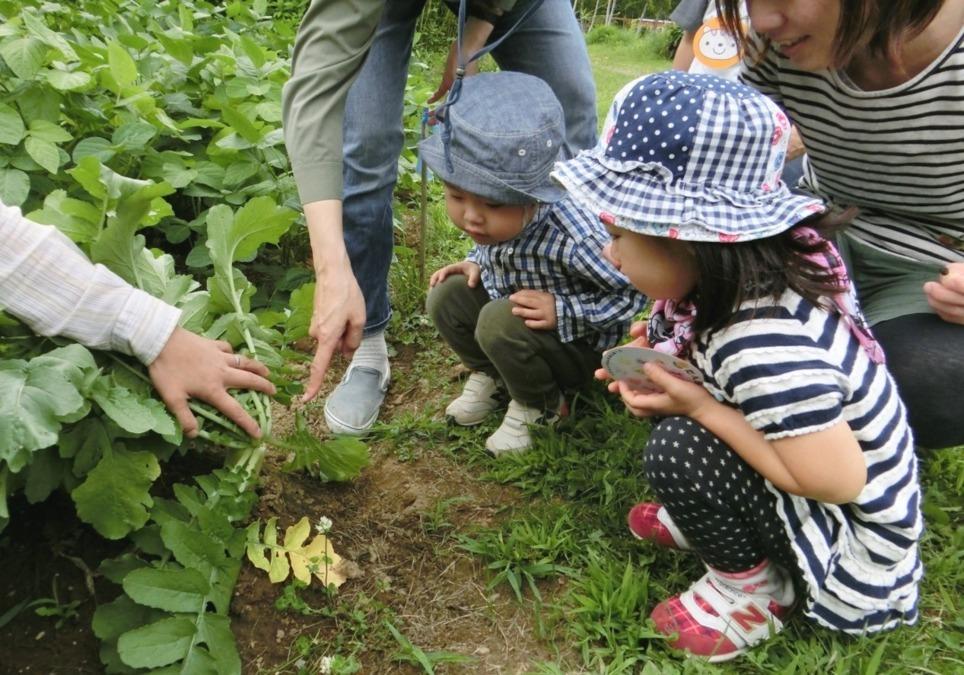 札幌円山幼稚園  (学校法人  愛基学園)の画像