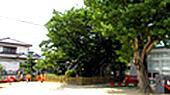 島田保育園の画像