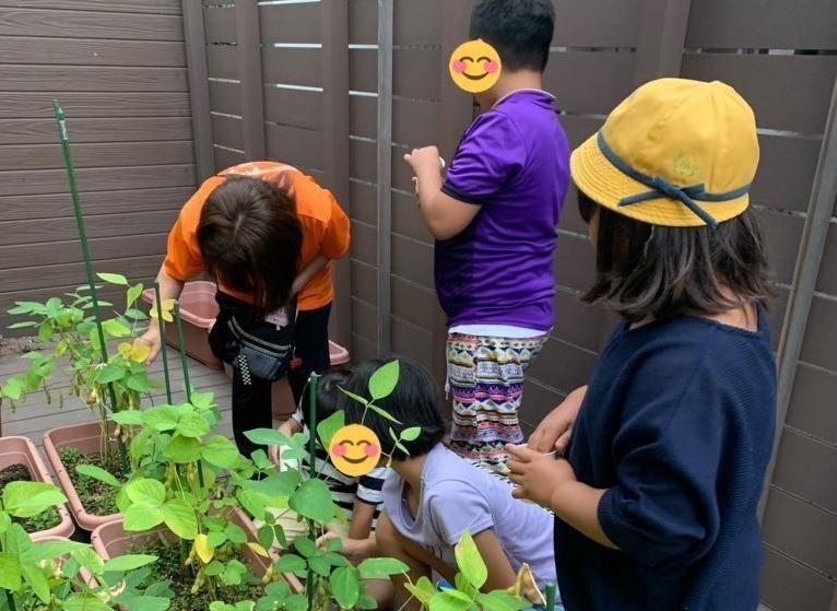 ファーストシーンドリーム上一色(児童発達支援管理責任者の求人)の写真1枚目:教室のウッドデッキで野菜や植物を栽培しています。野菜は収穫してみんなで料理します