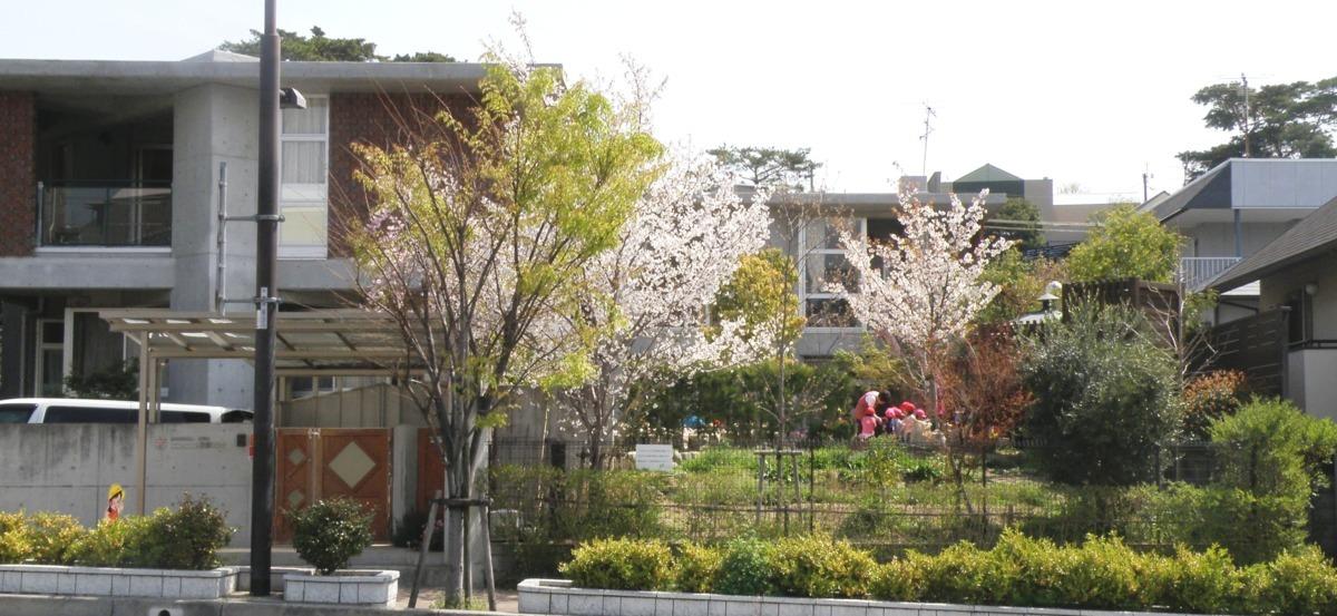 幼保連携型認定こども園 ニコニコ桜保育園の画像