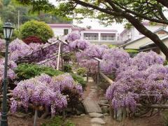 軽費老人ホーム 宝寿園の画像
