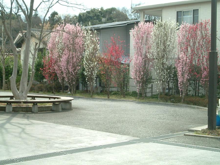 介護老人保健施設 宮沢の里 はなもも苑(言語聴覚士の求人)の写真: