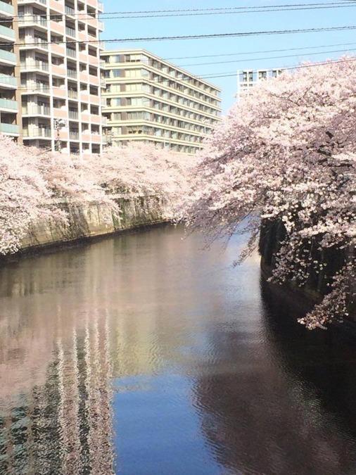 ケアホーム西五反田(ケアマネジャーの求人)の写真:目黒川の目の前です