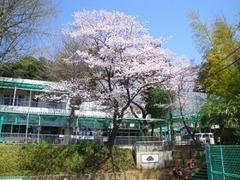 小野路保育園の画像