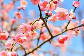 ケアプランセンター梅の華の画像