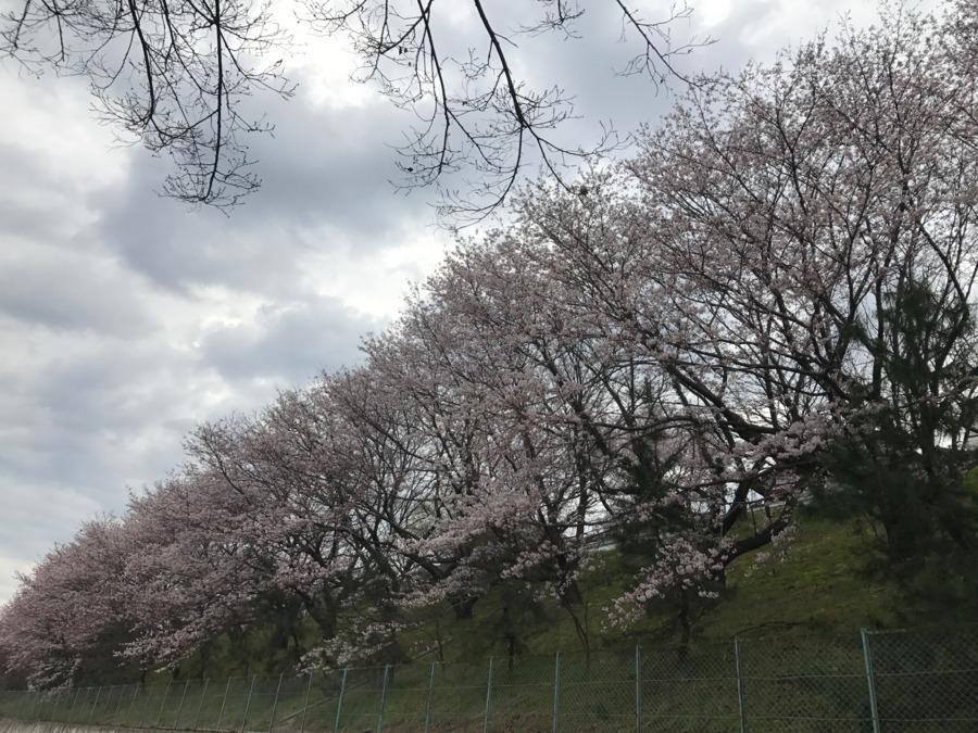 桜坂訪問看護ステーションの画像