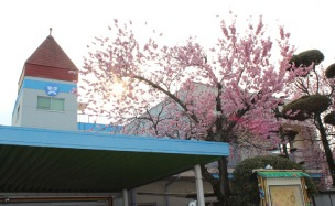 慶応幼稚園の画像