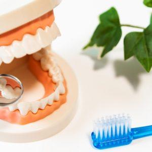 歯科助手でもできる?覚えておきたいP処・スケーリングなどの専門用語