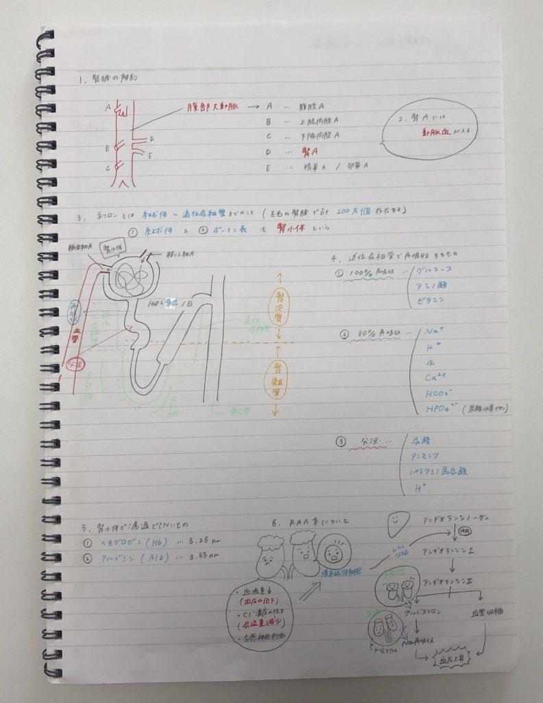 合格体験記_看護師_腎臓について勉強したノート
